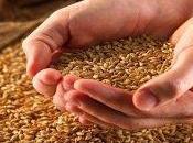 Cereali integrali, elisir lunga vita
