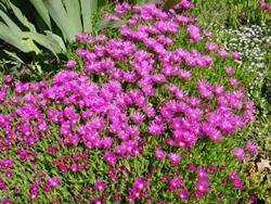 Piante grasse da giardino paperblog for Piante fiorite perenni da giardino