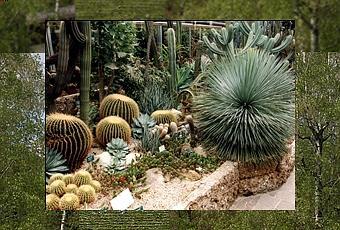 Piante grasse da giardino paperblog for Giardino roccioso con piante grasse