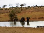 Come scegliere safari Kenya