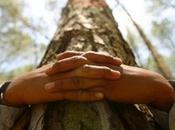 Abbracciare alberi,migliora salute?