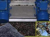 30/01/2015 Energia pulita dagli scarti delle olive: lavoro ricercatori svedesi