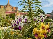 nuova meta #ClamoreInAsia: torno Cambogia!