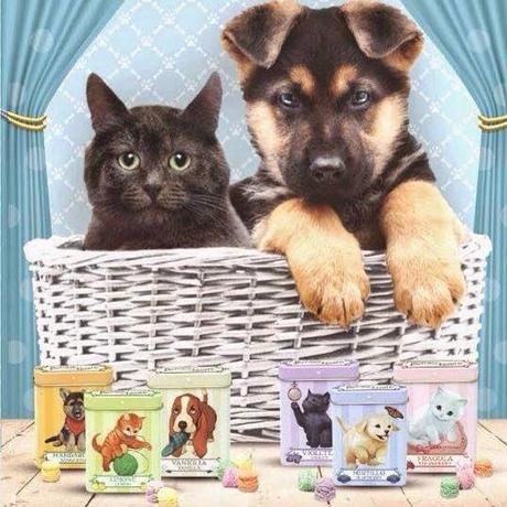 Le pastiglie pi tenere in casa leone paperblog for Cani da tenere in casa