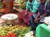 rivoluzione verde Malawi: modello l'Africa?