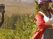 cin, calice vino sudafricano