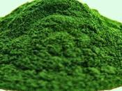 L'integratore perfetto: clorella, alga sorprendenti benefici