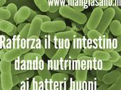 Rafforza intestino dando nutrimento batteri buoni