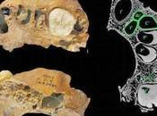 Nuovo misterioso fossile Ominide trovato nella Cina Nord