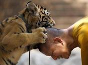 proposito tigri...e amore animali: