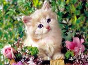 Schema punto croce: Gattino fiori