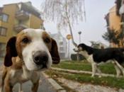 Siracusa: cuccioli abbandonati pessime condizioni igieniche, salvati dalla Polizia