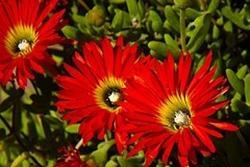 Aiuole piante grasse paperblog for Piante x aiuole