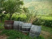 tour alla ricerca nettare degli Dei. vino