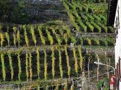 Terrazzamenti: itinerari slow Valtellina