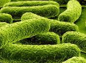 bisogno proteggersi batteri?