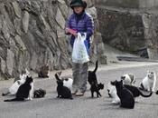 isole governate gatti Giappone