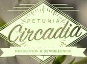 Petunia Circadia: cambia colore annaffiata Birra