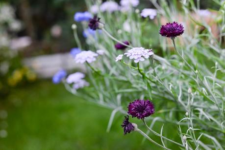 Giardinaggio piante e fiori profumati paperblog - Fiori gialli profumati ...