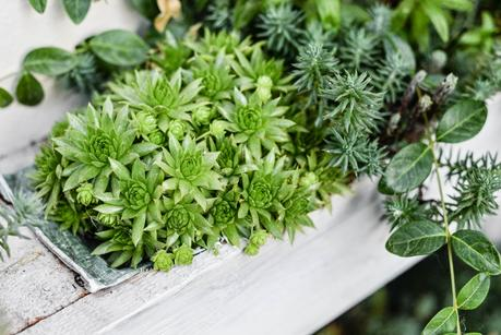 Giardinaggio piante e fiori profumati paperblog for Arbusti profumati da giardino