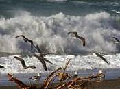 Energia mare: nuovo impegno ricerca Gruppo Enel