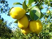 Incipit cazzo libri scriverò (N°1): simmetria della morte limoni raccolti terra