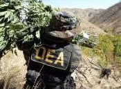 """Usa, agenti della anni hanno partecipato """"festini"""" prostitute pagate """"narcos"""""""