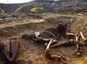 Cambridge, ritrovato scheletro cavallo