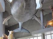 balenottera azzura Arte Scienza Genova Shanghai