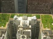 Tetti verdi: ecoroof, moderni giardini pensili