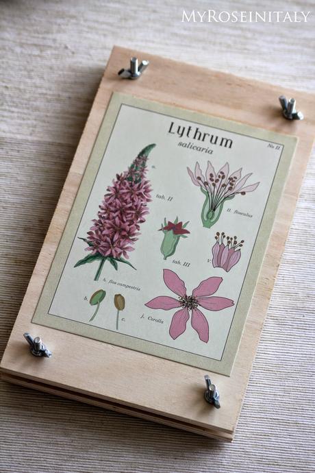 Come realizzare una pressa per fiori e piante paperblog for Pressa idraulica fai da te