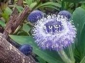magico giardino Dina