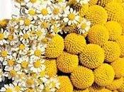 bouquet giallo craspedia