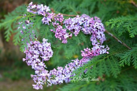 Il fiore del mese un cuore profumato di lill paperblog for Avvolgere l aggiunta portico