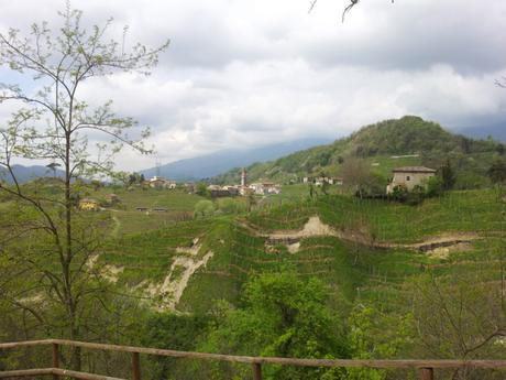 Conegliano Veneto: su e giù per le colline tra vigneti di prosecco