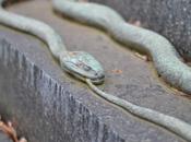 Cimitero Centrale Vienna: guida tascabile simbolismo cimiteriale