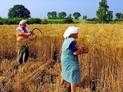 solo pane: Agricoltura Creatività Arte