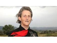 Siate gentili mucche. storia Temple Grandin