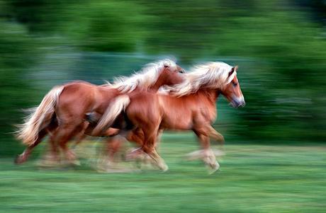 . running horses N° 2 by www.carloscherer.eu, on Flickr