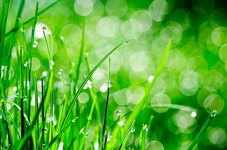 Water drops on grass by Sergiu Bacioiu, on Flickr