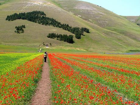 Castelluccio di Norcia e la fioritura by gengish, on Flickr