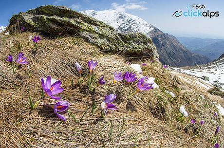 Pennellate di primavera all'Alpe Pianezz by Sisto Nikon - CLICKALPS PHOTOGRAPHER, on Flickr