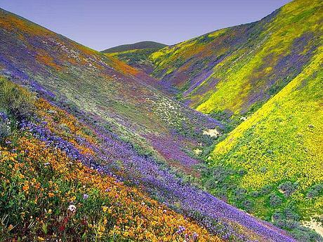 Flowery Hills by subsider34, on Flickr