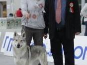 nuova stella sorgendo firmamento cani lupi cecoslovacchi nome Daisy Jane