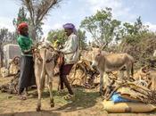 mila miglia intorno mondo #38: injera caffè… ecco l'Etiopia
