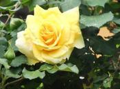 rose donne sono fiore:auguri entrambe!
