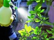 Come fare repellenti insetticidi naturali casa, giardino, orto balcone