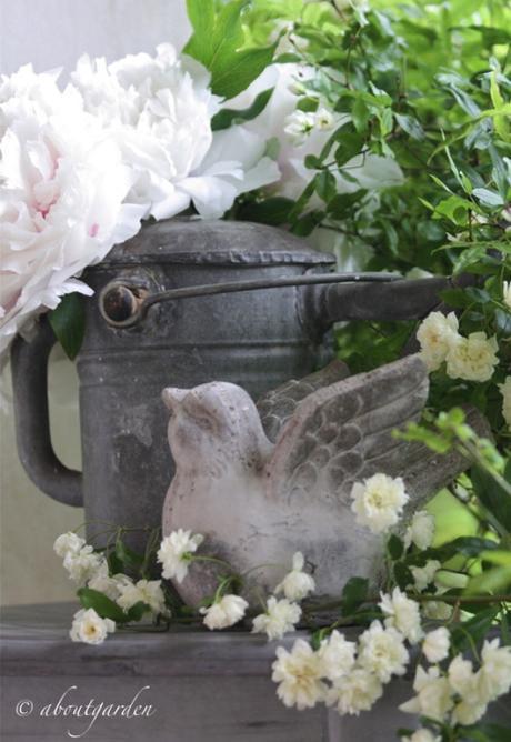 Come annaffiare le piante in vaso paperblog for Annaffiare le piante