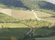 Brunella Bertani suoi viaggi Chianti