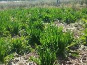 Prodotto Agricolo Tipico sano grazie all'epigenetica